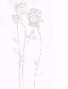 3 Roses02132014