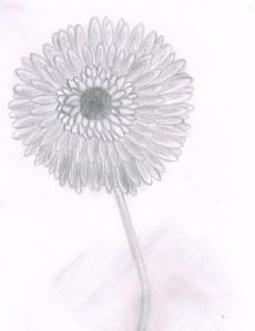 Dandelion02132014