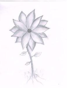 Flower02132014