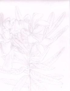 Flowers02132014