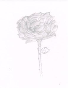 Rose02132014